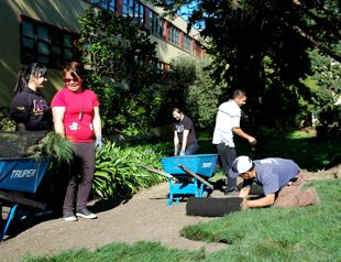 Photo of students unrolling rolls of green turf onto the ground