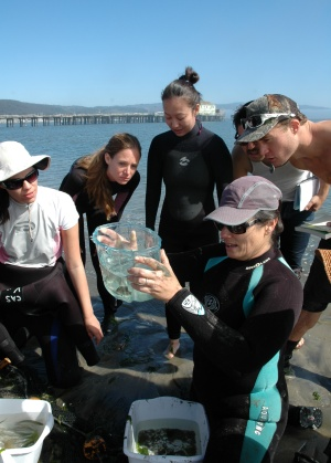 Photo of Karen Crow and a group of students on the beach, holding a clear plastic tub containing small fish
