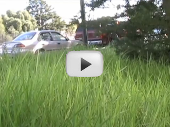 A photo of a lawn growing unfettered. Link leads to relevant Youtube video