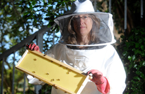 Photo of Gretchen LeBuhn, associate professor of biology, directs the Great Sunflower Project.  Photo credit: Noah Berger